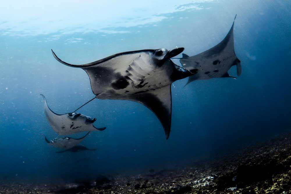 Komodo Dive Centre