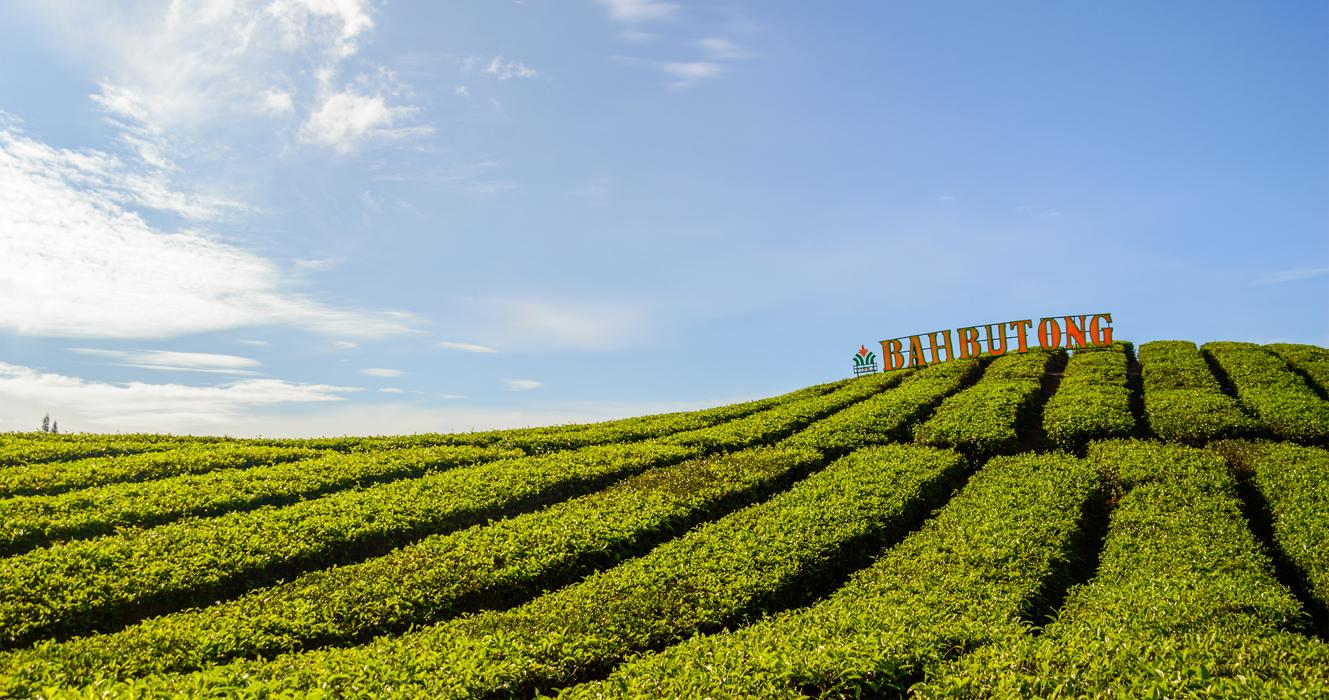 Bahbutong Tea Plantation