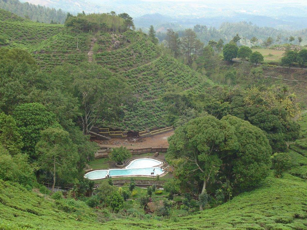 Jamus Tea Plantation