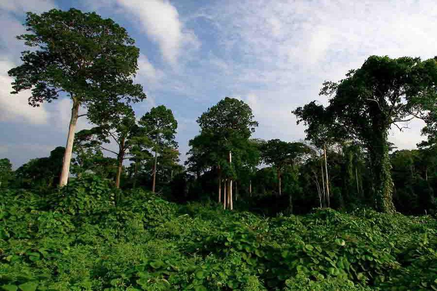 Bukit Duabelas National Park