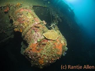 Tjendrawasih Barge Wreck Dive Site