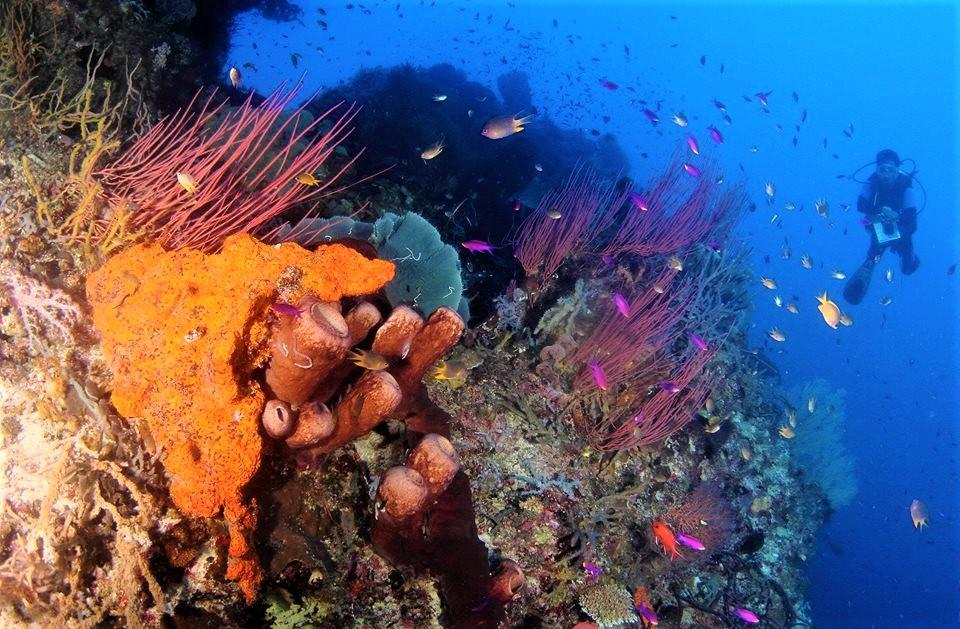 Bomba Divers