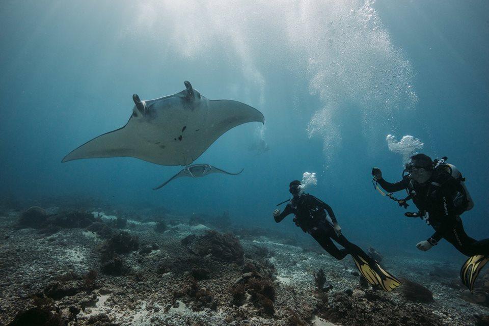Manta Rhei Dive Center Komodo - Indonesia