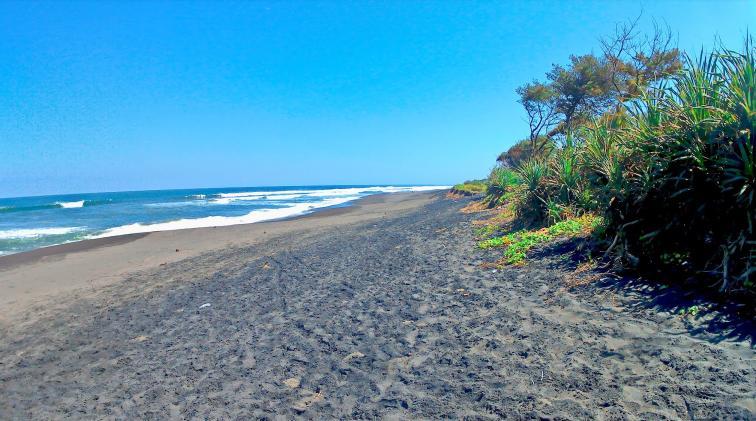 Pandansimo Beach