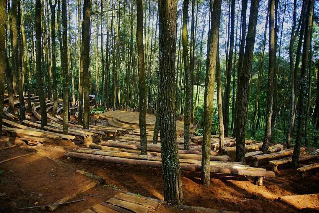 Mangunan Dlingo Pine Forest
