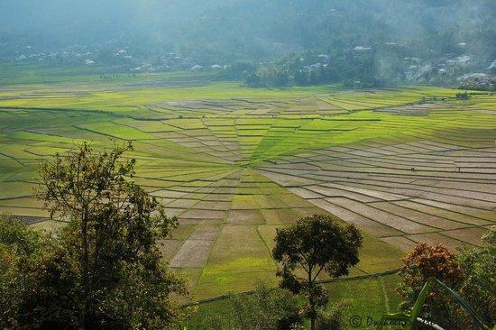 Lingko Spider Web Rice Fields