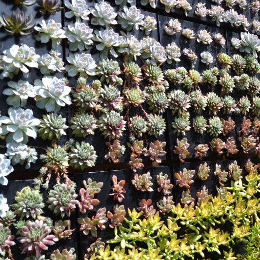 Vertical Walls & Succulent Creations Image