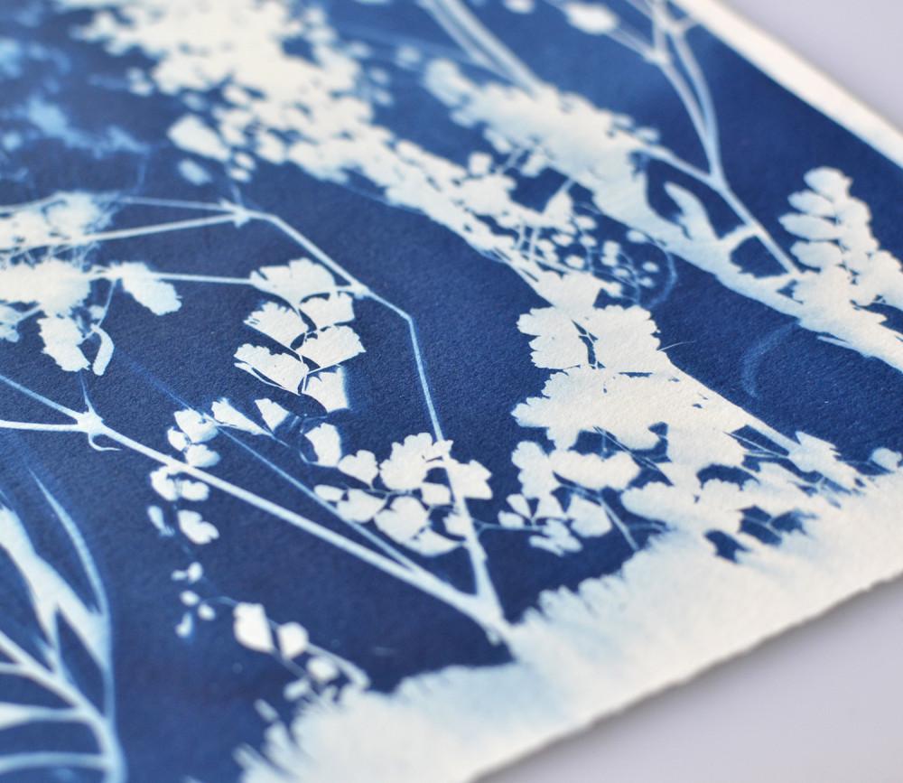 Jessica Le Design & Illustration Image