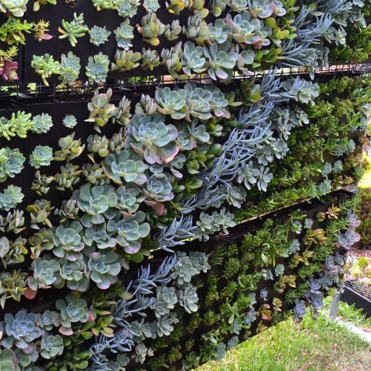 Vertical Walls & Succulent Creations