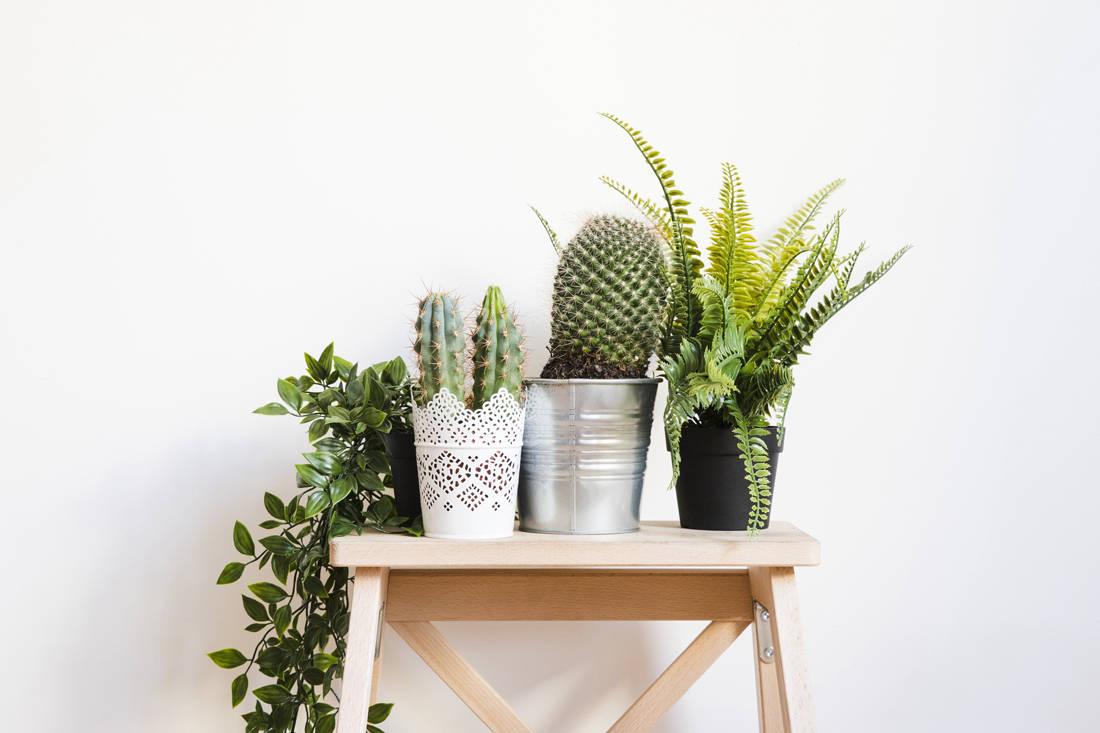 Earth Day tips - houseplants