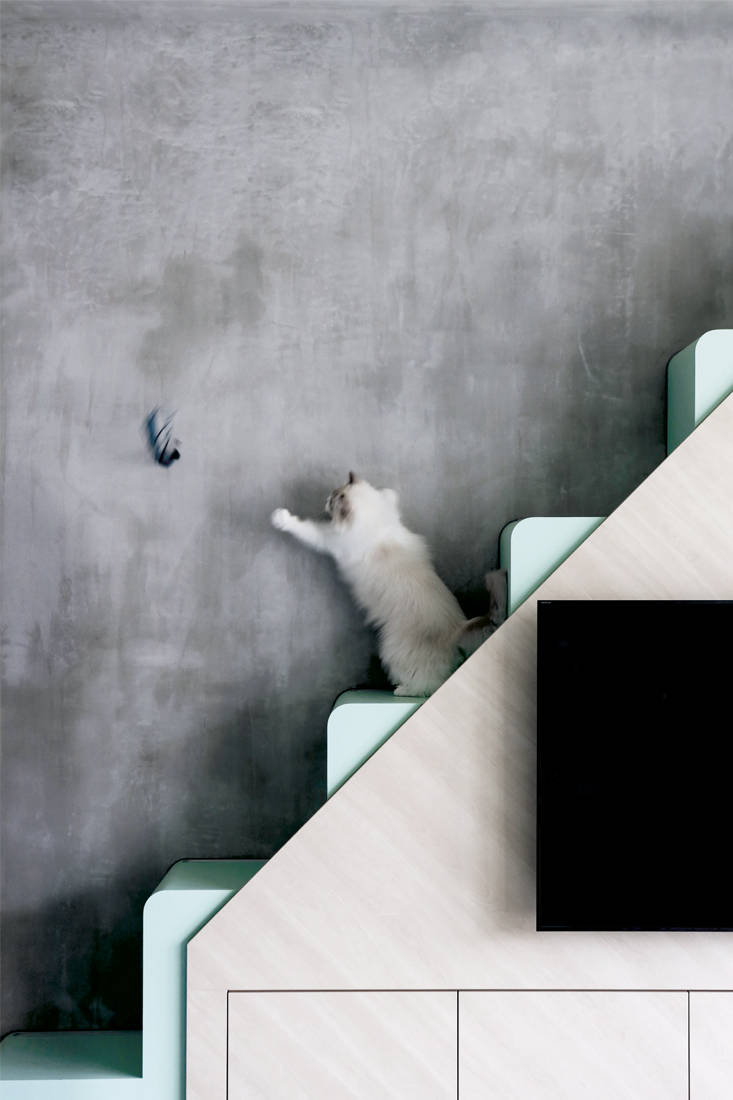 cat-friendly home | Linear Space Concepts - cat