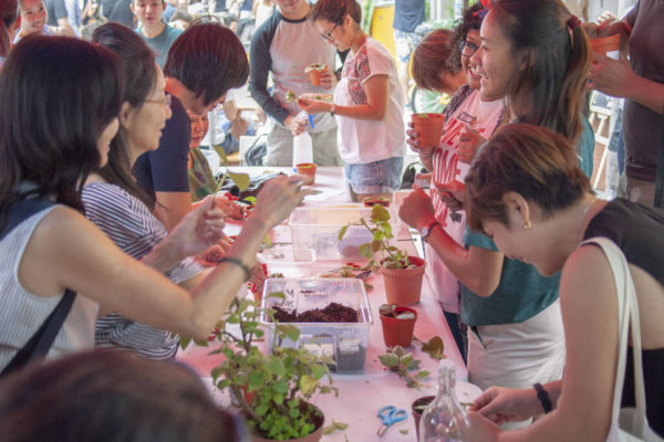 grow your own food_Edible Garden City workshop_urban farming