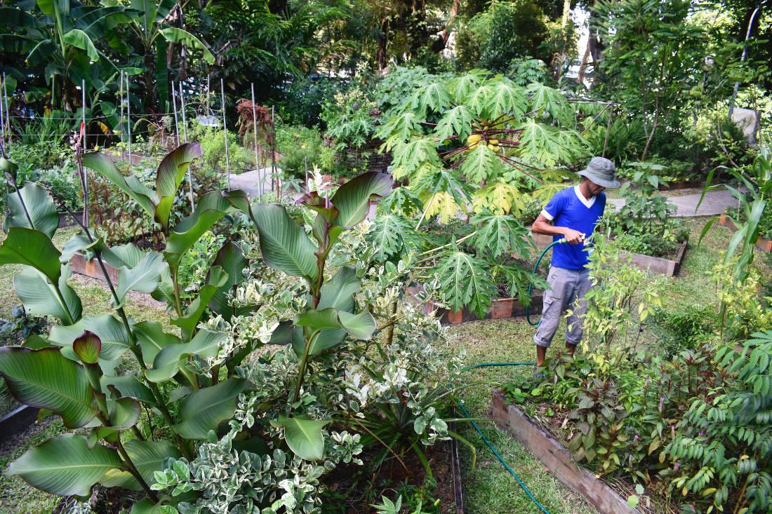 grow your own food - Open Farm Community - urban farming