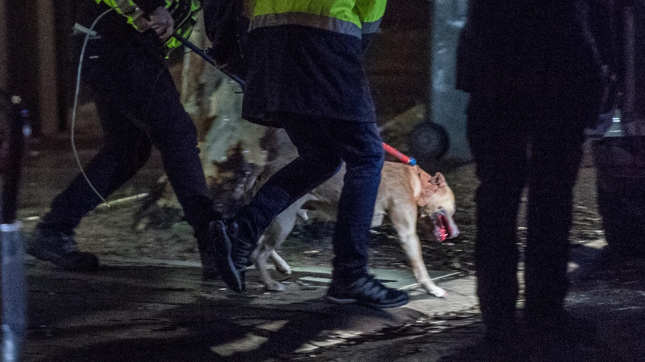 Mill Park dog attack: Man killed, wife seriously injured at