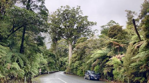 Waipoua Forest Camp & Retreat