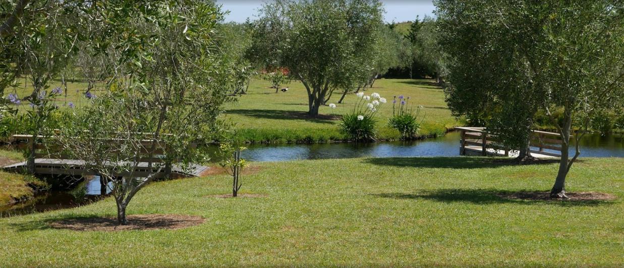 Poppawhiwhi Olive Grove