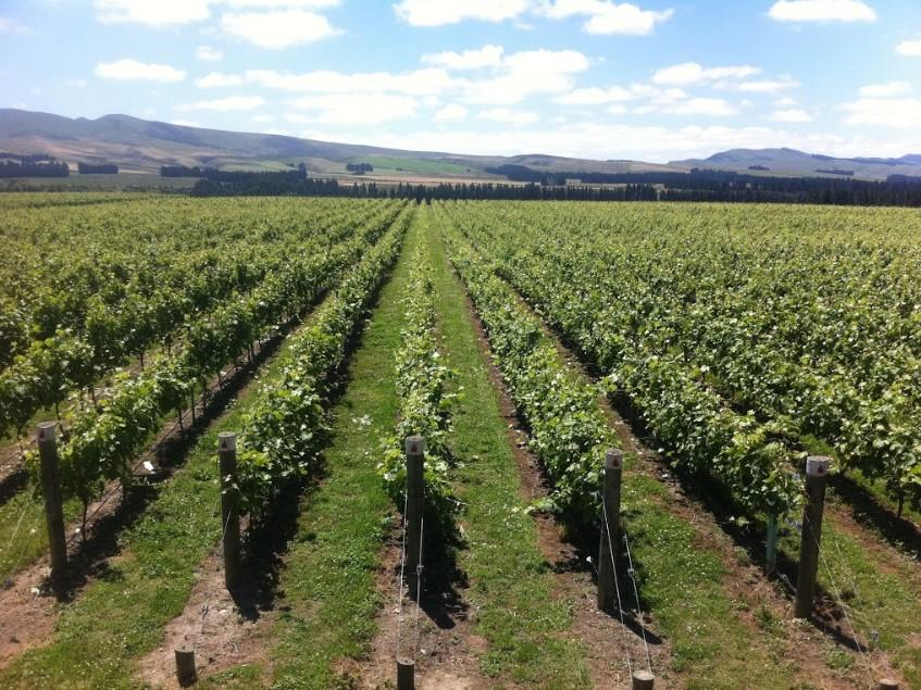 Georges Road Wines