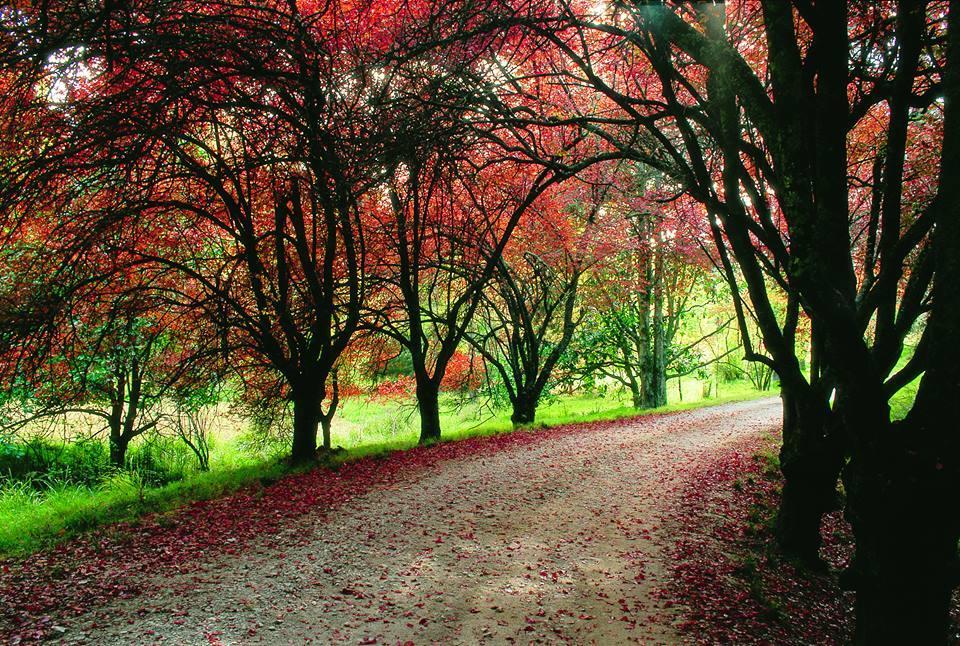 Eastwoodhill Arboretum Gisborne