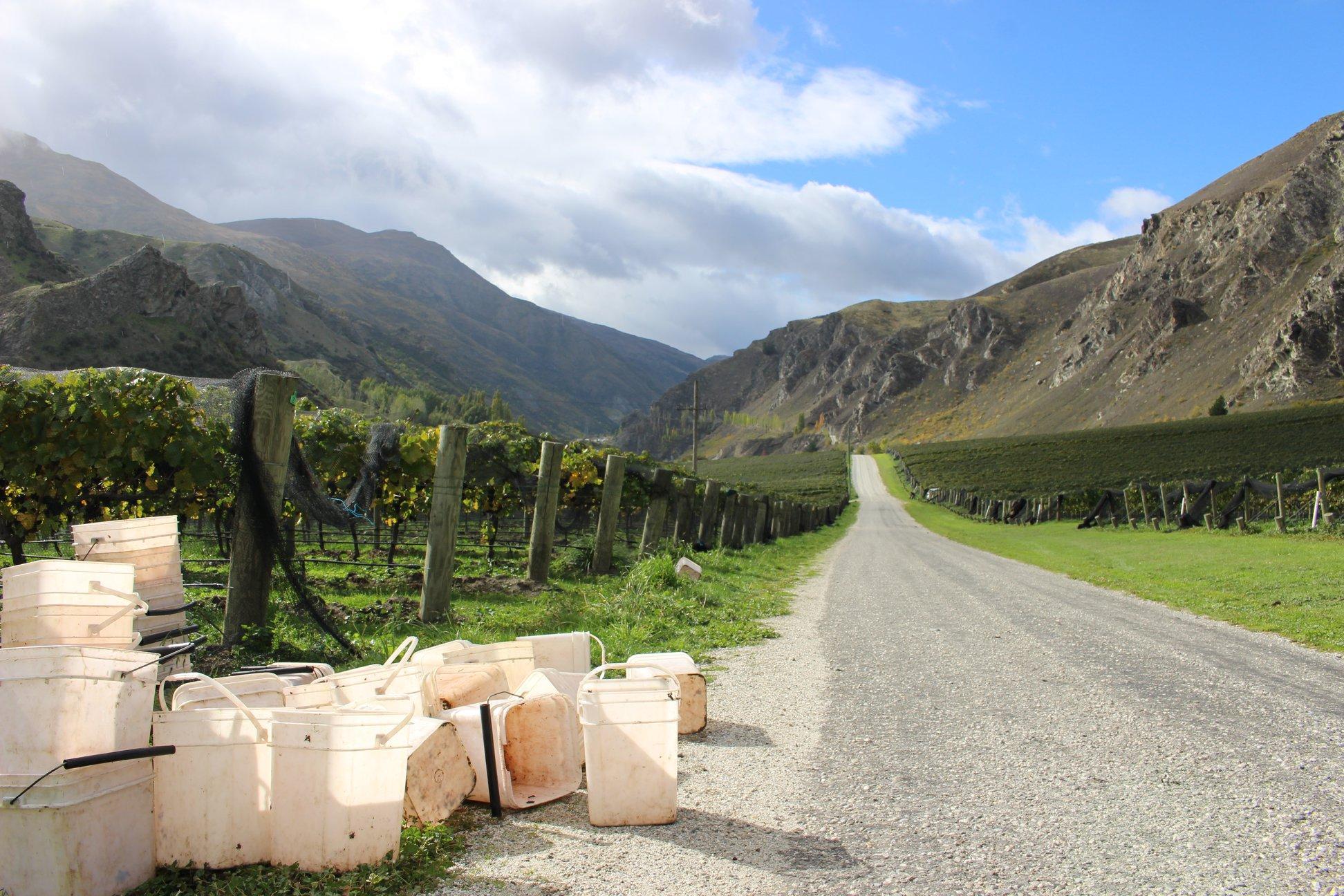 Chard Farm Vineyard