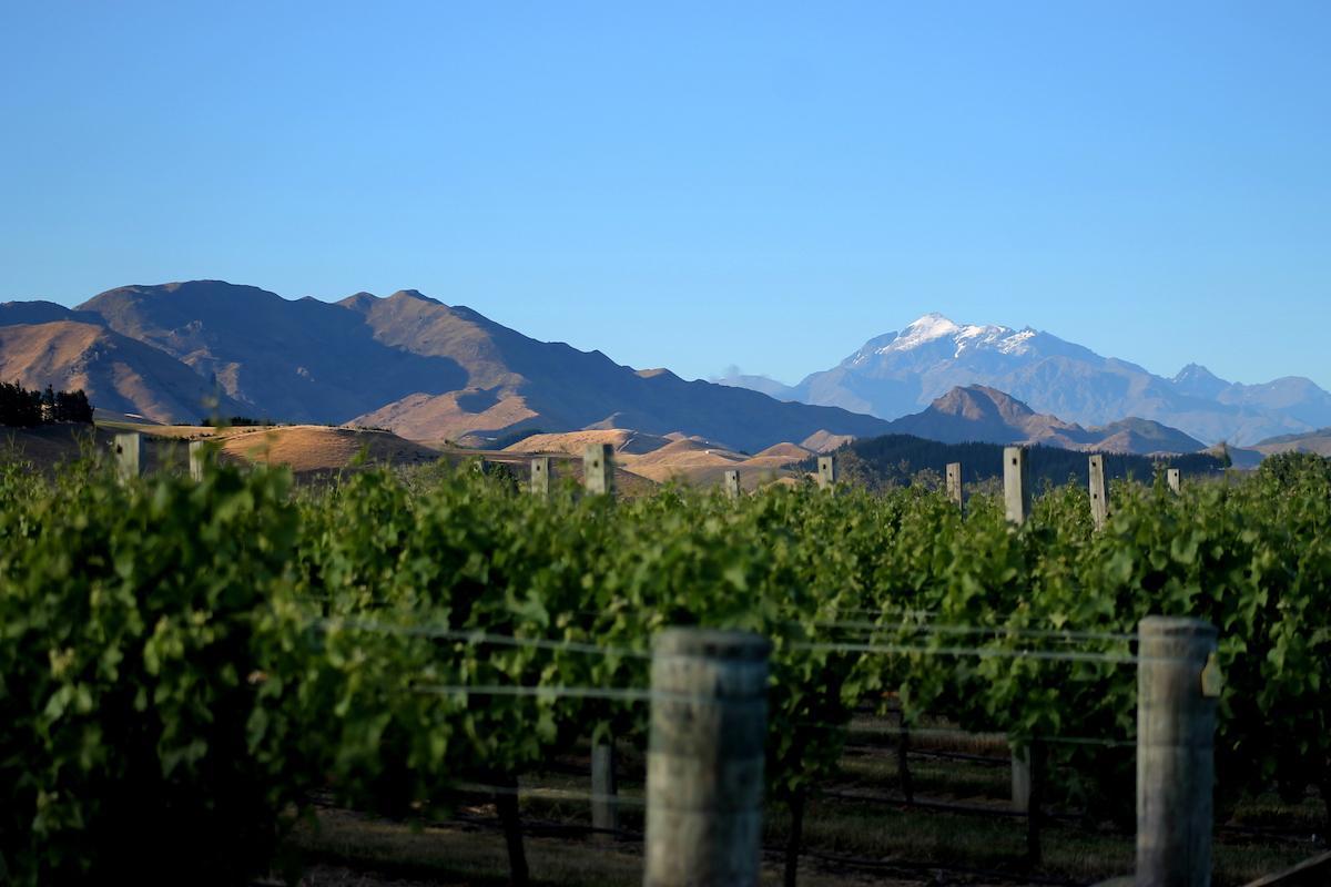 Sileni Estates Winery and Cellar Door