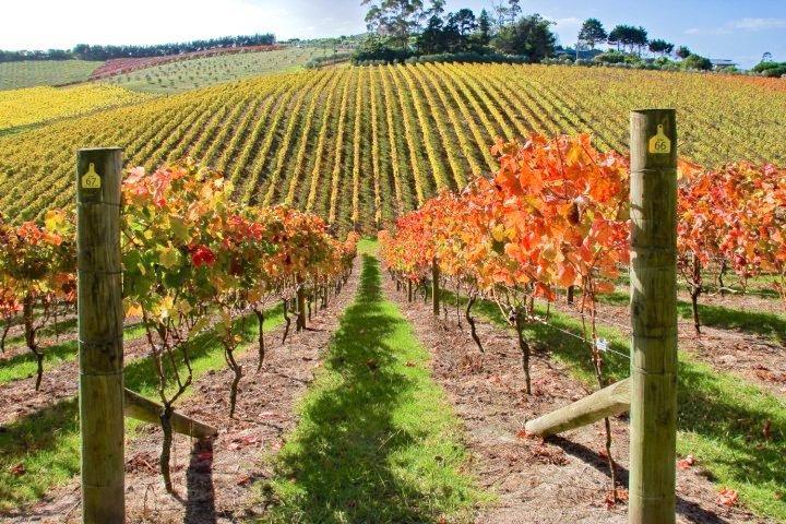 Cable Bay Vineyards - Marlborough