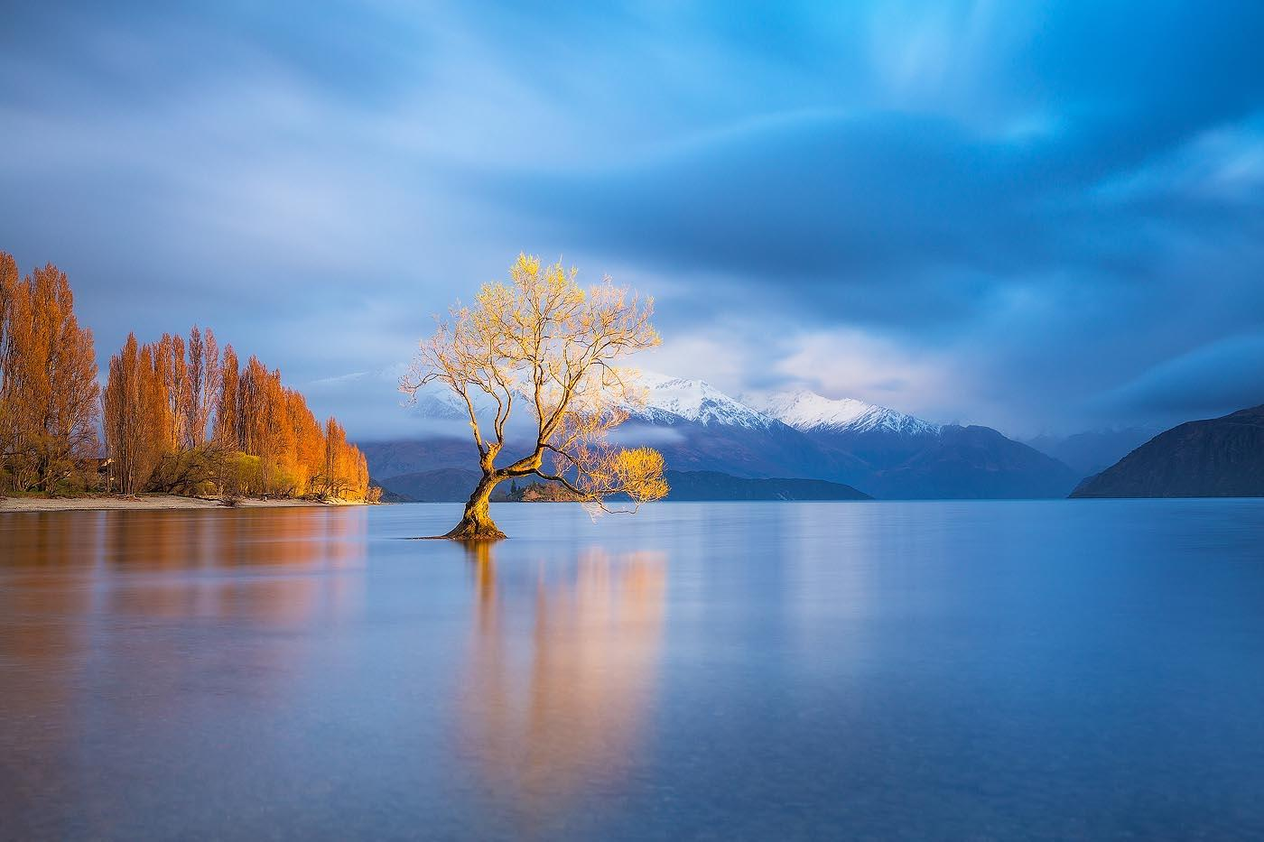 That Wanaka Tree - Lake Wanaka