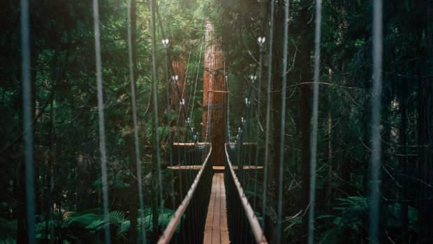 Redwoods - Whakarewarewa Forest