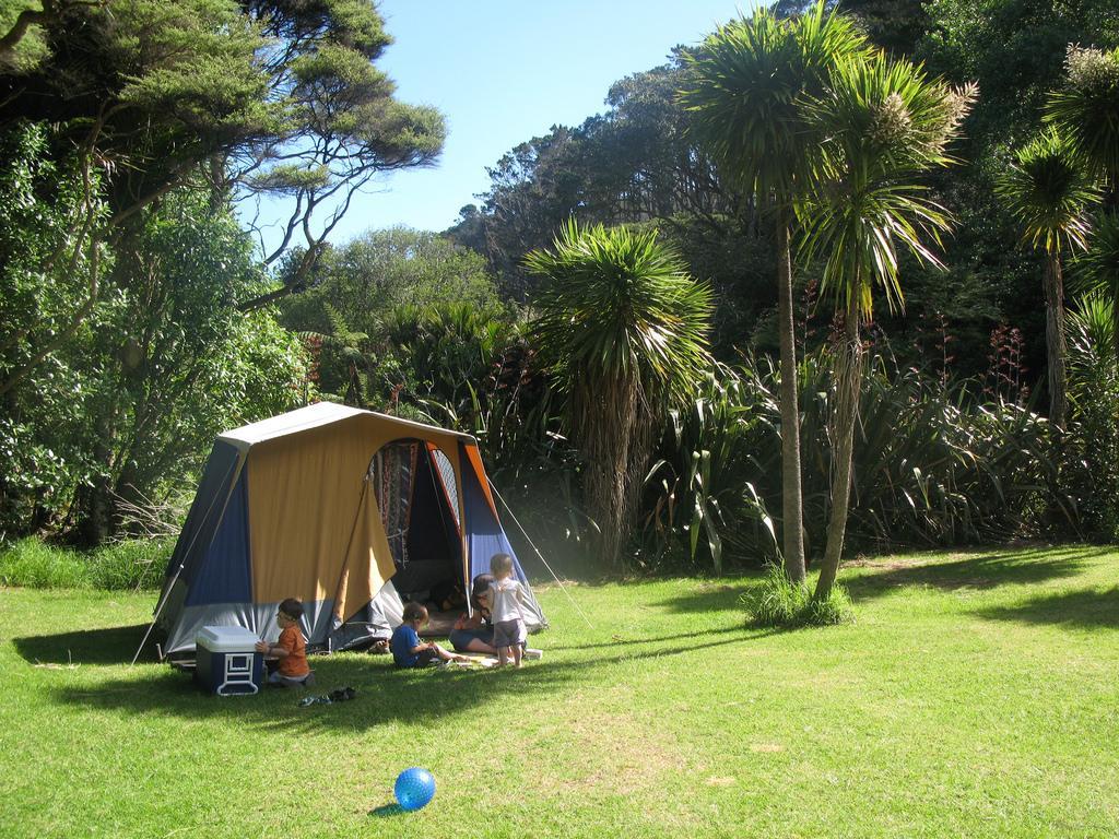 McCreadies Paddock campground at Karekare