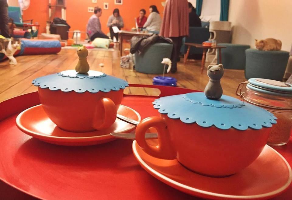 BaristaCats Cafe