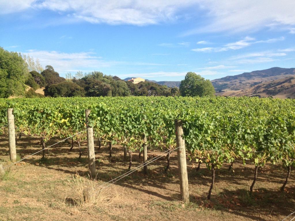 Takamatua Valley Vineyards