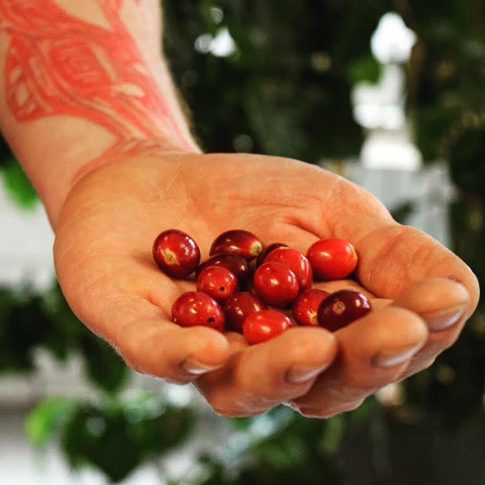 Havana Coffee Works Ltd