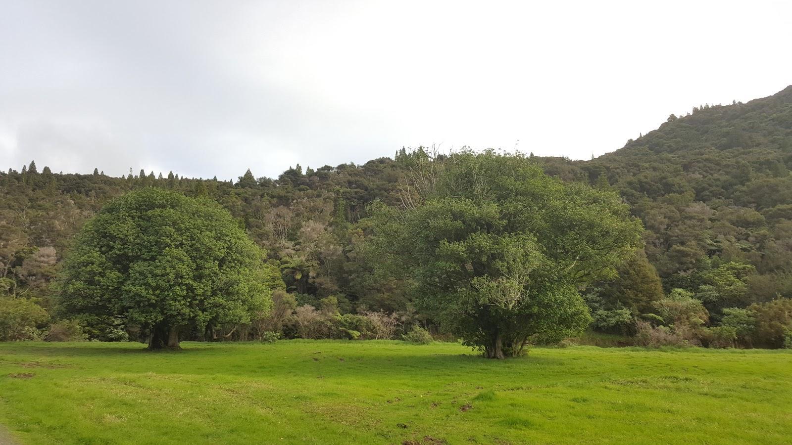 Raetea North Side Campsite
