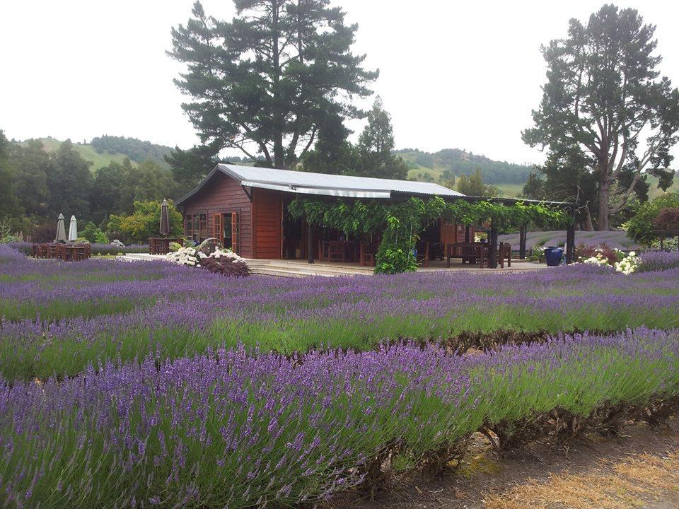 Laurens Lavender