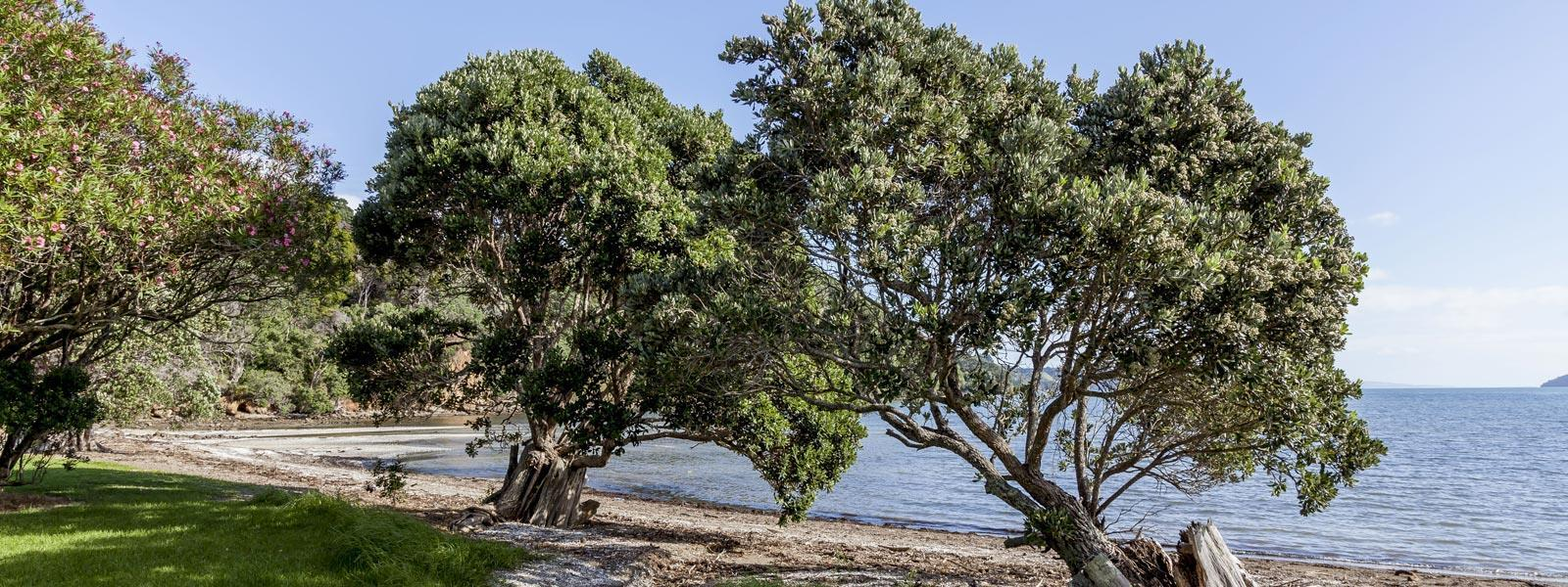 Shelly Beach TOP 10 Holiday Park - Beachfront Coromandel