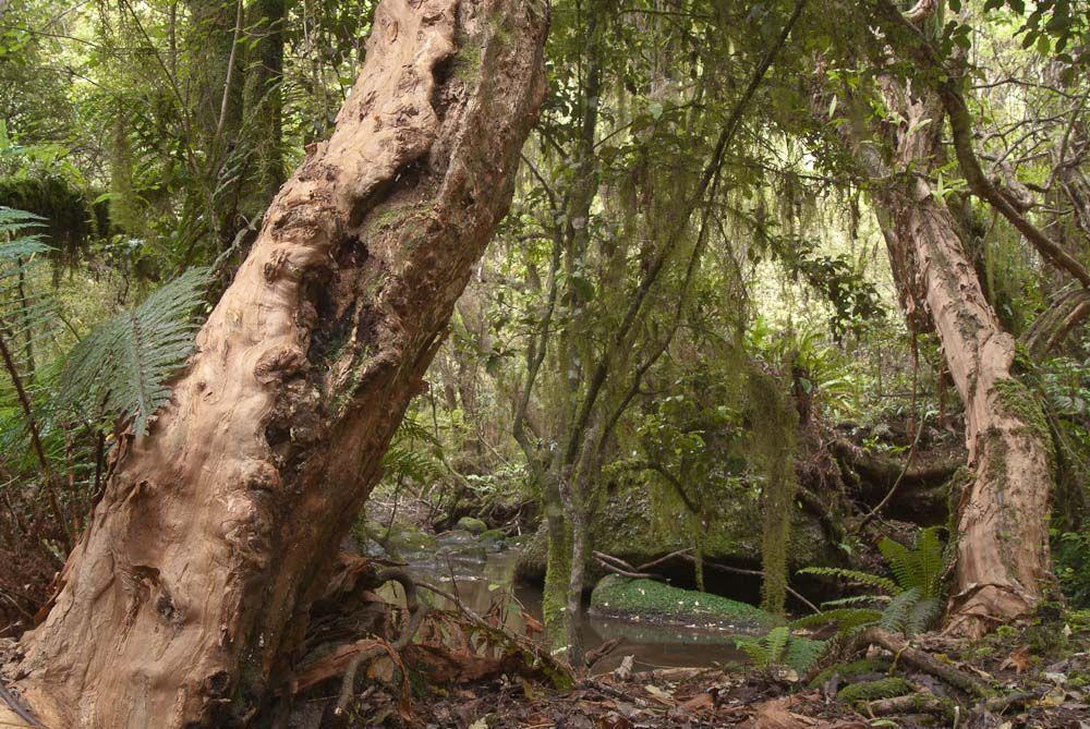 Dolamore Park Scenic Reserve