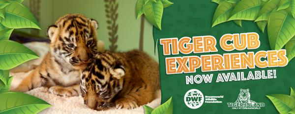 180110-010 Tiger Cub Experience_1680x650 banner.jpg