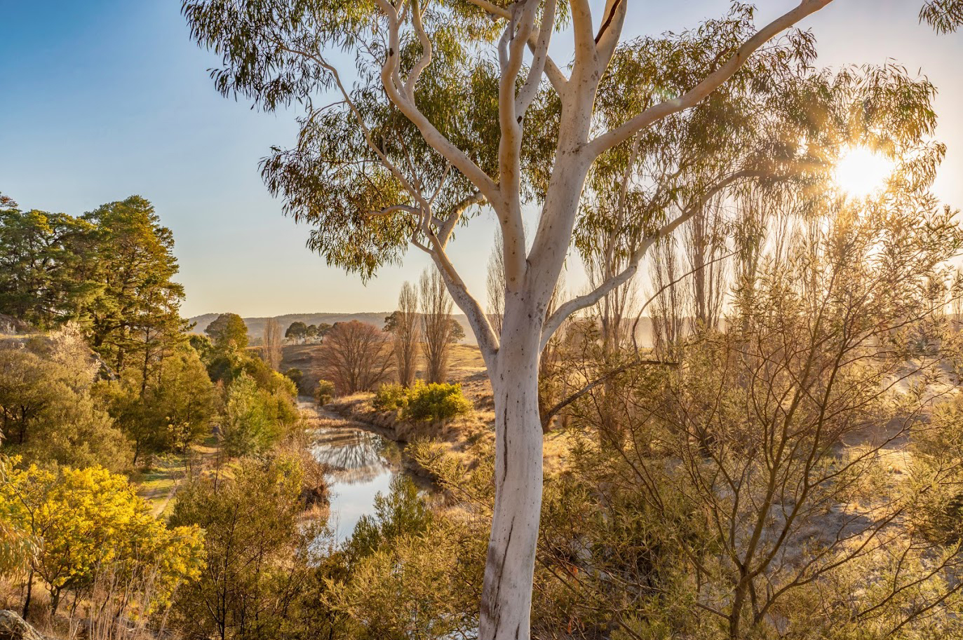 Picture of a golden sunlit landscape in Queanbeyan area. Gumtrees in foreground, blue sky and river in background.