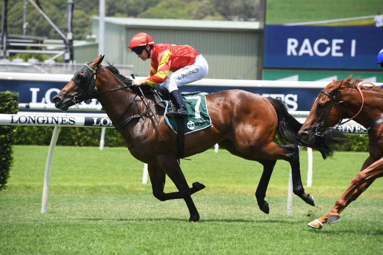 RETURN WITH HONOUR winning the Headwater At Vinery Handicap.