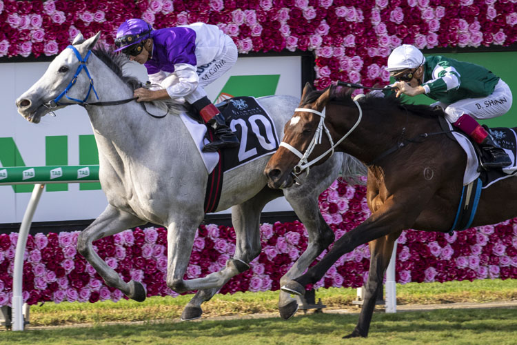The Candy Man winning the Eva Air Premier's Cup