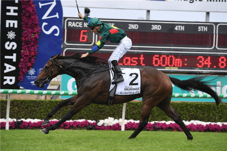 ALLIGATOR BLOOD winning the $2m Magic Millions 3yo Guineas.