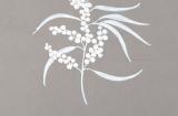 Artist's sketch of Golden Wattle (Acacia pycnantha)the
