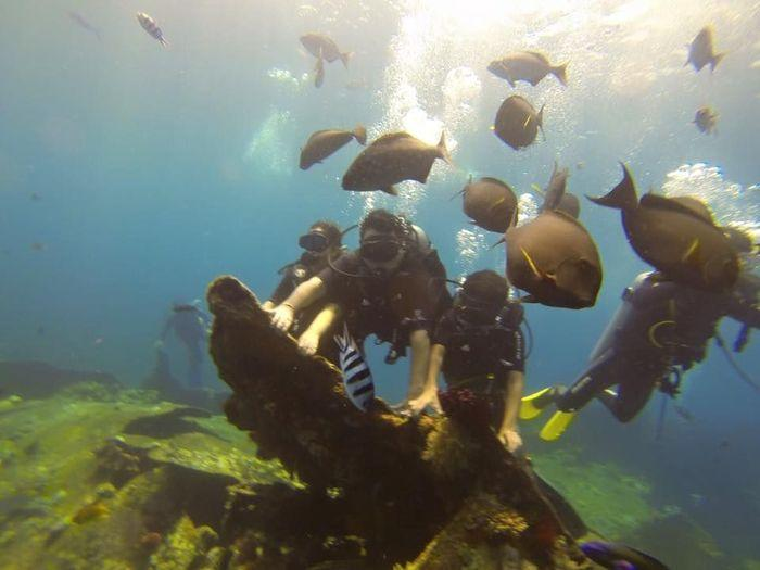 USS Liberty Shipwreck Scuba Diving Tour in Bali