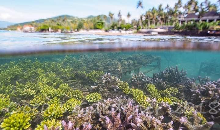 Ocean Gardener, Coral Experience