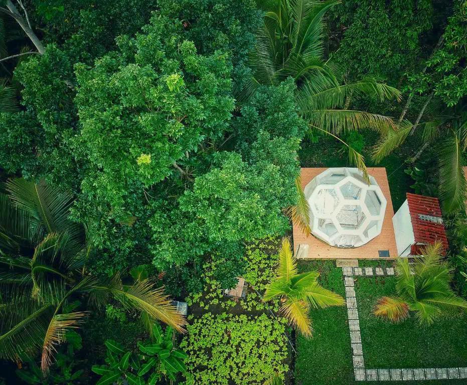 Jungle Bubble Lodge Ubud - Campsite