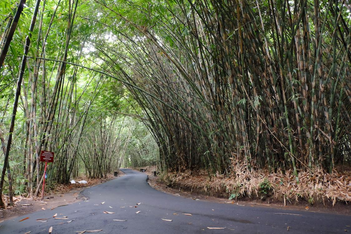 Bamboo Forest at Penglipuran Village