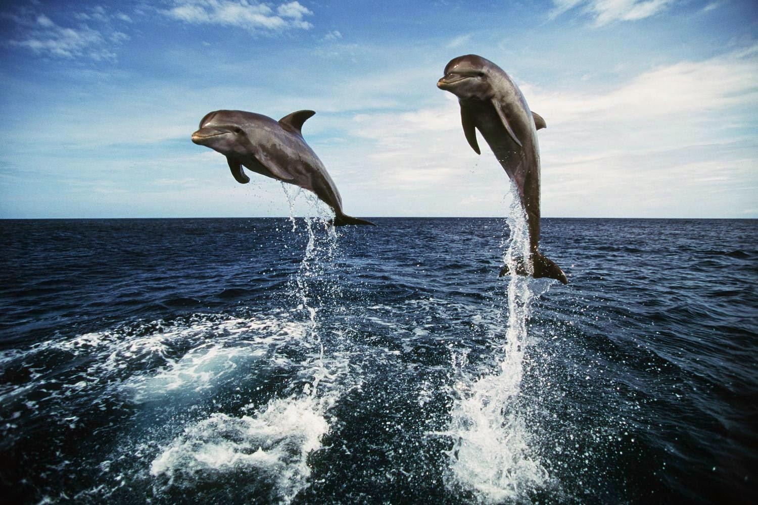 2-Day Dolphin and Sightseeing Tour