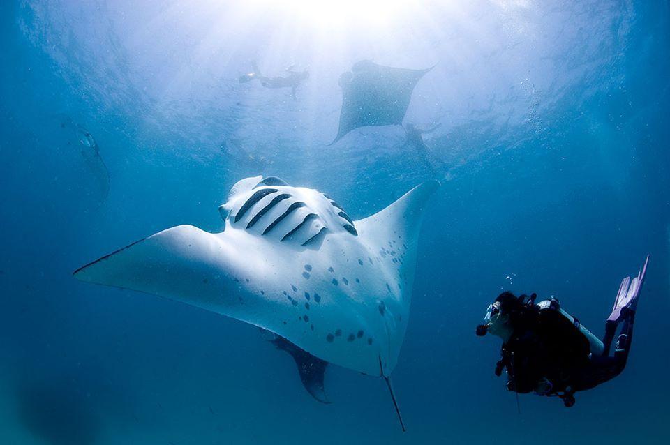 Ocean Gravity Bali Dive School