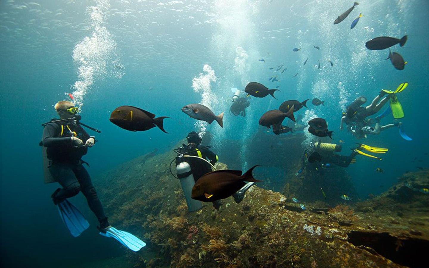 4-Day Bali Underwater Wonderland Tour: Tulamben Diving, Sidemen and Tirta Gangga