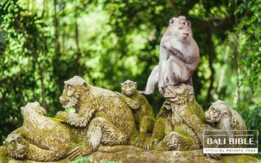 The Monkey Forest Tour - by The Bali Bible