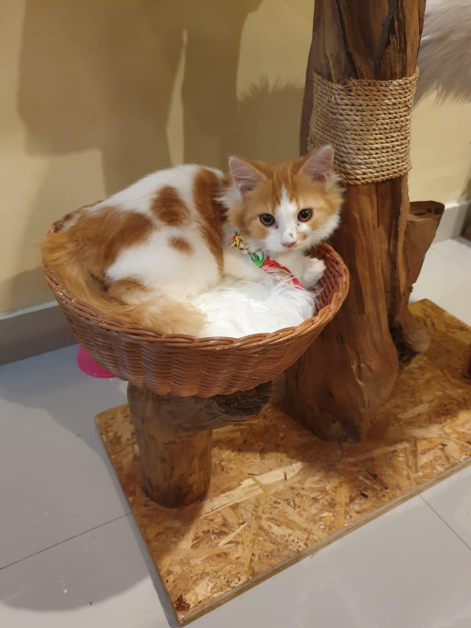 Cat Cafe Sanur